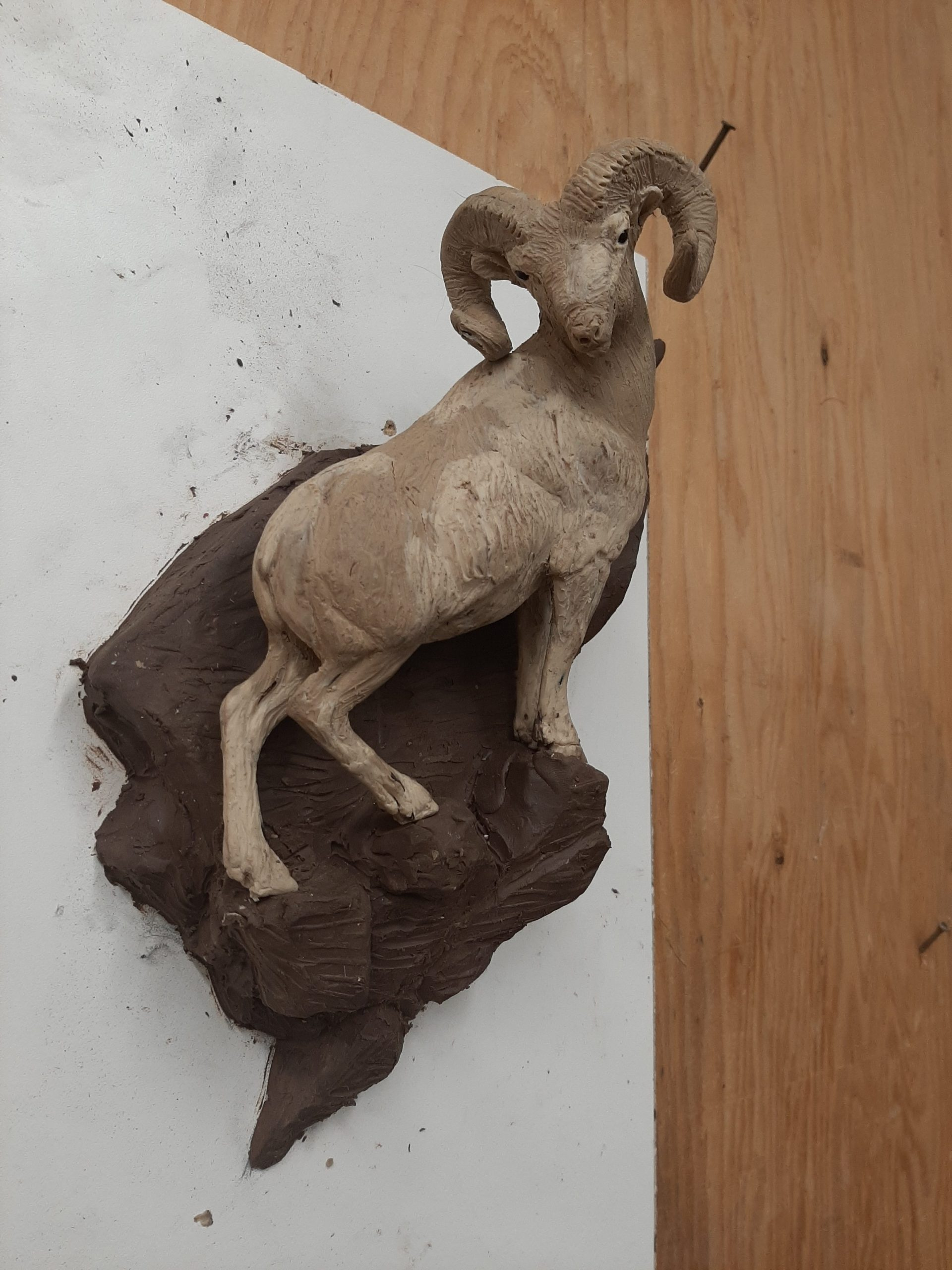 """""""Follow Me"""" - Rocky Mountain Bighorn Sheep 11"""" Tall X 7 1/2 """" Wide. High relief that will hang on the wall It's now at the foundry and I am accepting precast orders at a special price."""